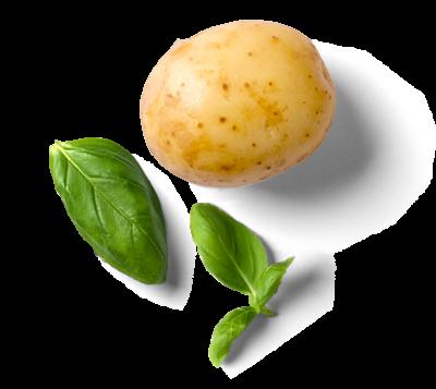 Kartoffel und Basilikum als Zutaten des DeINEr Foodtrucks Luckenwalde