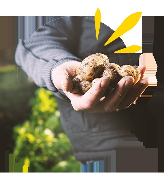Kartoffelhand als Zeichen für Frische beim DeINER Foodtruck Brandenburg